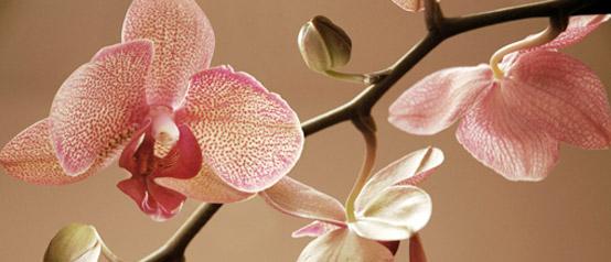 Fotografia orchidee kolor